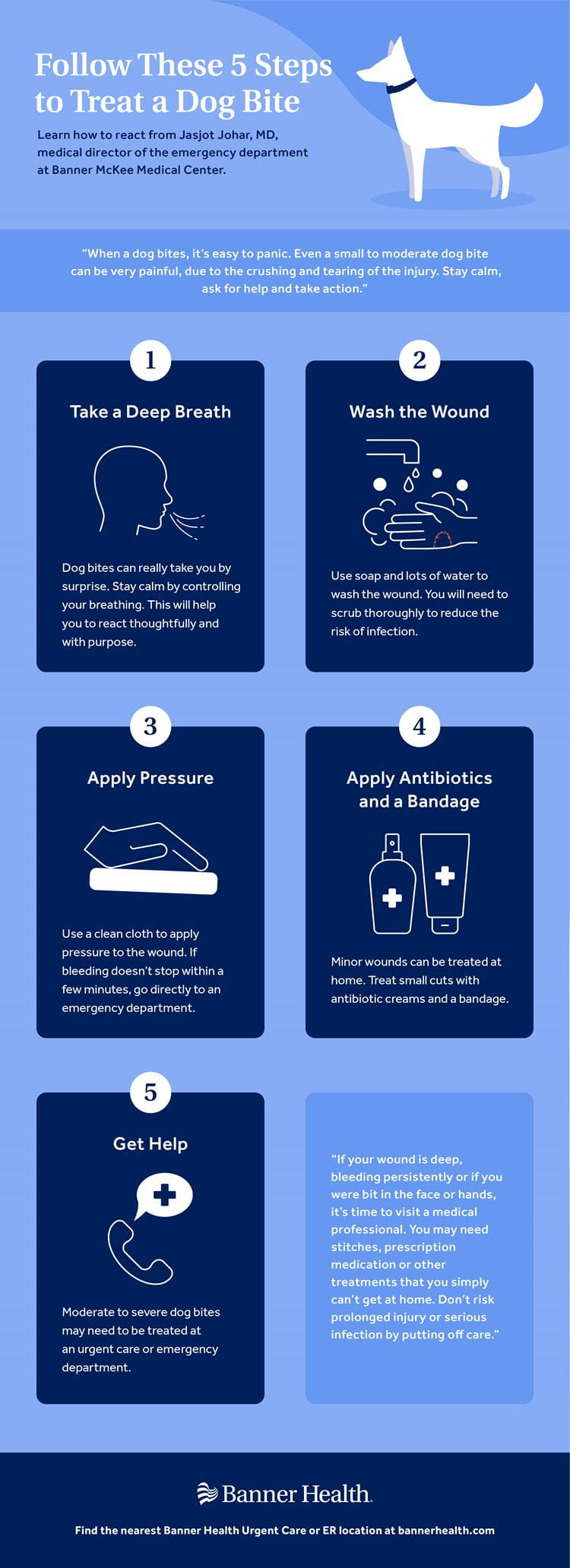 5 Steps to Treat a Dog Bite Infographic